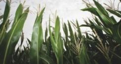 Tamna strana biogoriva